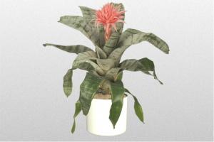 Achmea Silver Vase
