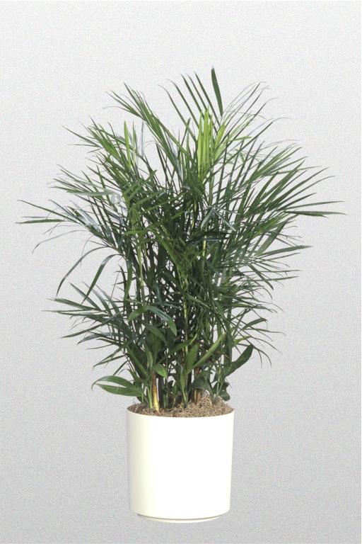Plantations Inc Floor Plants