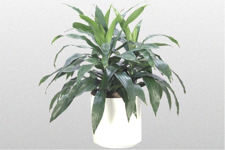 Plantations Inc. – Plant Rentals