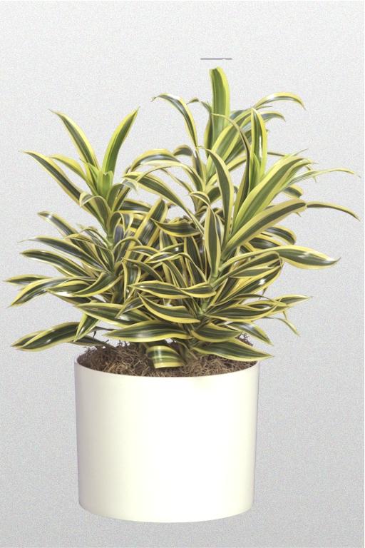 Plantations Inc Tabletop Plants