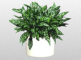 floor-plants