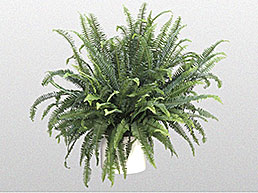 tabletop-plants