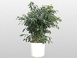 large-plants